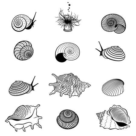 Vector set of abstract, decorative, outline seashells and snails in black color, isolated, on white background.