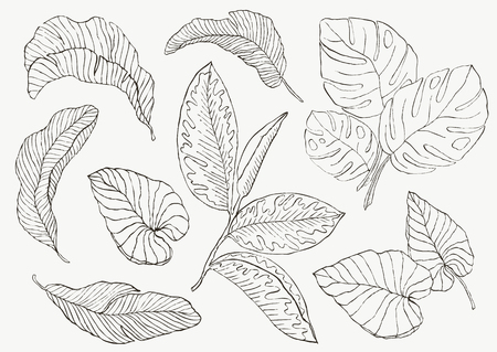 Set Leaf. Exotics. Vintage vector botanical illustration.