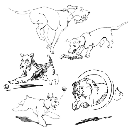 A set of drawings of different breeds dogs in motion. Games with dogs for a walk. Hand drawing sketch
