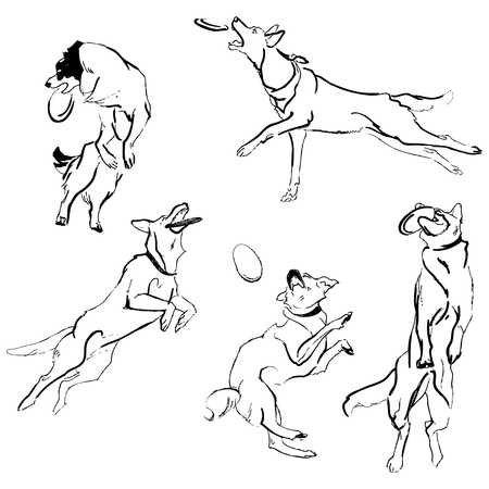 A collection of sketches breed dogs. Isolated hand drawings. Animal concept Illustration
