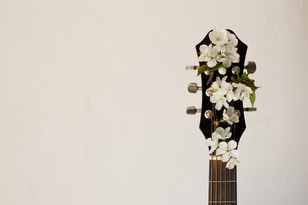Part of a guitar on a white background with several cherry blossoms. Concept of music, hobby, creativity Stockfoto