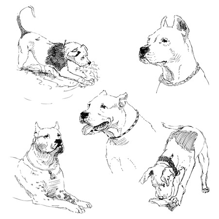 A set of drawings of adult dog and puppy. Highly detailed. Hand drawing sketch