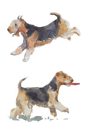 수채화 예술 강아지 초상화 흰색 배경에 고립. 귀여운 애완 동물 동물 손을 그려. 동물 개념입니다. 수채화 개념입니다. 스톡 콘텐츠