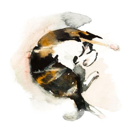 귀여운 colorfull 잠자는 고양이 흰색 배경에 고립. 수채화. 수채화 개념입니다. 동물 개념