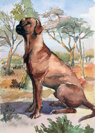 Ridgeback Dog breed. Watercolor original illustration. Hand drawing Art. Watercolor concept. Animal concept.