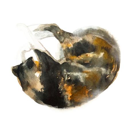 かわいいカラフルな寝てる猫は、白い背景で隔離。水彩画。水彩のコンセプトです。動物概念