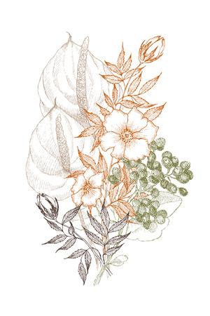 Vintage botanical illustration flower. Flower concept. Botanica concept. Vector design. Stok Fotoğraf - 90504757