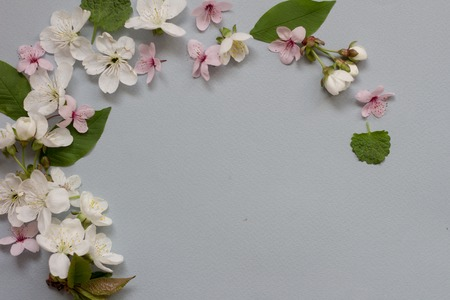 Apple flower blossom wreath over grey blue background.
