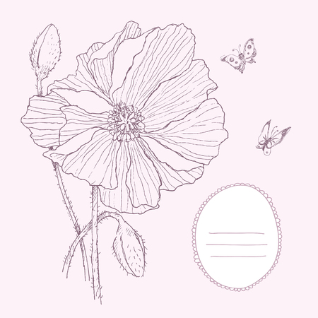 Vintage botanical illustration blossom flower with place for text. Poppy, butterfly. Vector design