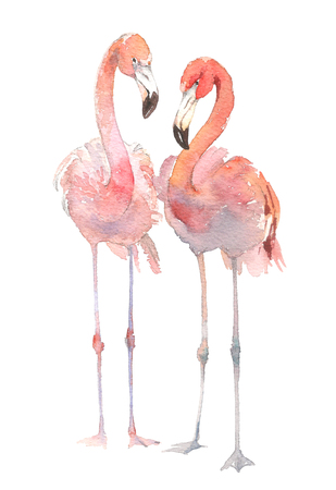 Two flamingo isolated on white background. Watercolor hand drawn illustration. Rastra. Banco de Imagens