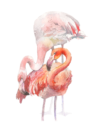 Two flamingo isolated on white background. Watercolor hand drawn illustration. Rastra. Stock Photo
