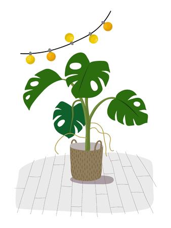 白色に隔離された鉢植えのモンステラ植物。ポットに緑の家の装飾的な花、手描きの平らな漫画のイラスト。白い背景ベクトルで分離されたアイコ  イラスト・ベクター素材