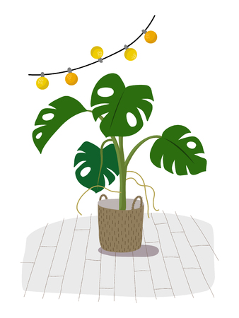 A potted monstera plant isolated on white. A green home decorative flower in pot, hand drawn flat cartoon illustration. Icon isolated on white background vector. Archivio Fotografico - 96517731