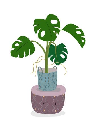 白色に隔離された鉢植えのモンステラ植物。ポットの緑の家の装飾的な花。手描きフラット漫画のイラスト。アイコンは白で分離されています。ベ  イラスト・ベクター素材