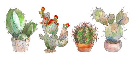 Set of watercolor botanical illustration cactus, isolated object, tropics