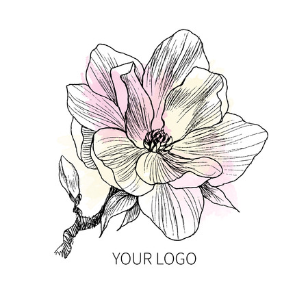 Ink, pencil, the leaves and flowers of Magnolia isolate. Line art transparent background. Hand drawn nature painting. Freehand sketching illustration