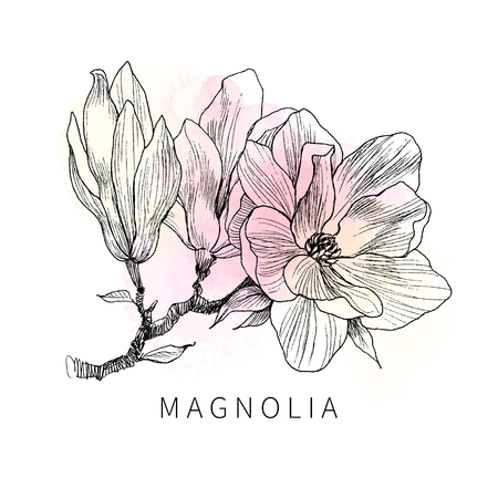 Ink, pencil, the leaves, and flowers of Magnolia isolate.Hand drew nature painting. Freehand sketching illustration