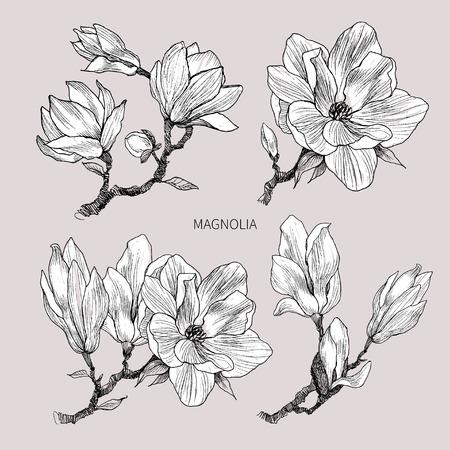 Tinte, Bleistift, Blätter und Blüten des Magnolienisolats. Linie transparenter Hintergrund der Kunst. Hand gezeichnete Naturmalerei. Freihandzeichnenillustration. Vektorgrafik