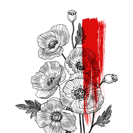 California poppy flowers drawn and sketch with line-art on white backgrounds. Vector design