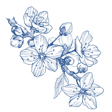 Amandelbloesem tak geïsoleerd op wit. Vintage botanische hand getrokken illustratie. Lentebloemen van appel- of kersenboom. Vector Illustratie