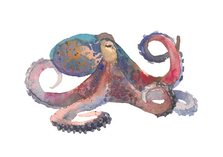 Octopus. Hand drawn illustration in watercolor style isolated on white background 스톡 콘텐츠