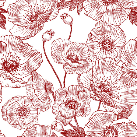 California poppy flowers drawn and sketch with line-art on white backgrounds.