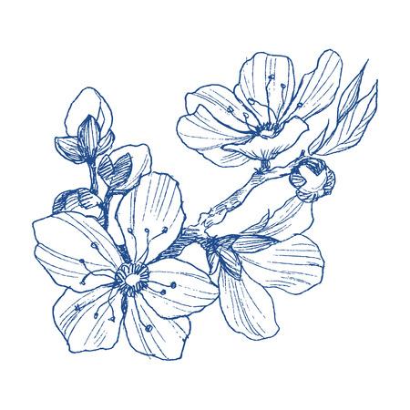 Branche de fleur d'amandier isolée sur blanc. Illustration botanique vintage dessinés à la main. Fleurs de printemps de pommier ou de cerisier. Vecteurs