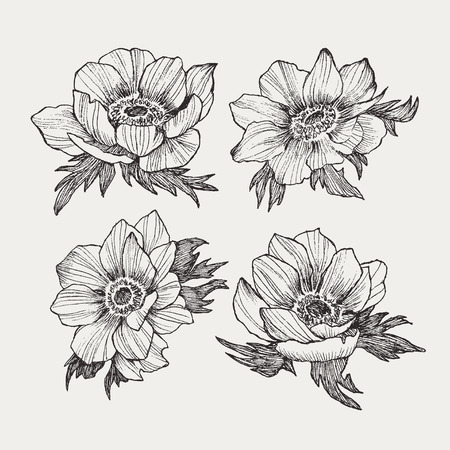 Vector vintage anemone set. Hand drawn illustration.  イラスト・ベクター素材