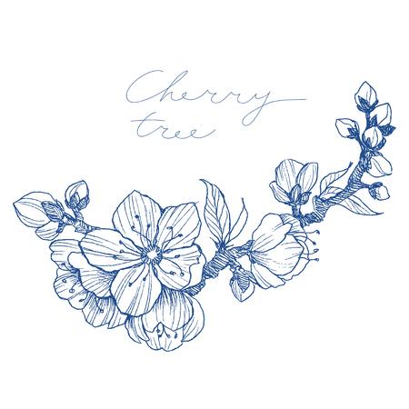 アーモンドの花の枝は白く隔離された。ヴィンテージボタニカルハンド描きイラスト。リンゴや桜の春の花。 写真素材 - 99039609