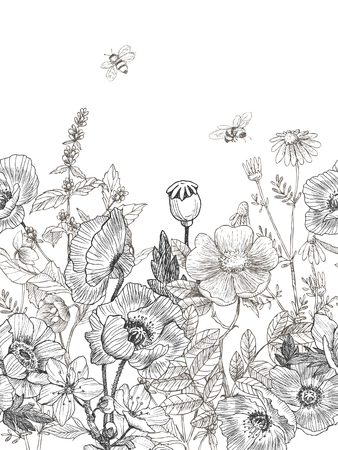 Wild and herbs plants seamless border. Vintage botanical hand drawn illustration. Spring flowers.