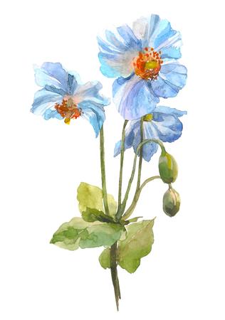 Blue herb flower. Watercolor floral illustration. Floral decorative element on white background.
