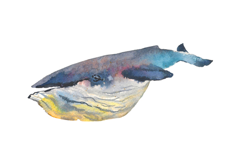 Whale. Sea animal. Watercolor Hand-painted Illustration Isolated on white background Stok Fotoğraf