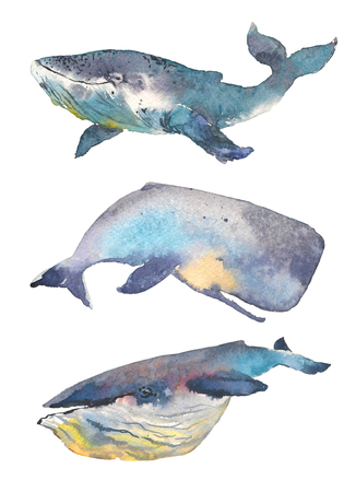 Whales set. Sea animal. Watercolor Hand-painted Illustration Isolated on white background Stock Photo