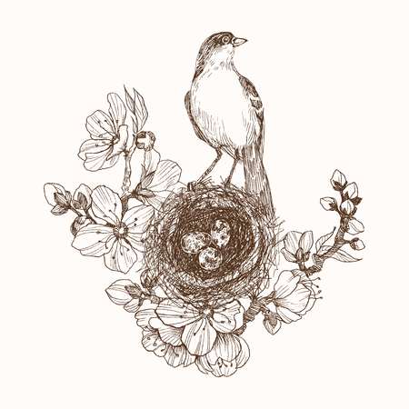 Hand drawn nest with spotted eggs and bird on blooming brunch Illustration