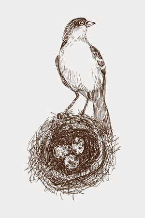 Vector illustration of hand drawn nest with spotted eggs and bird. Graphic style, beautiful illustration