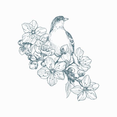 Vector illustration of hand drawn bird on blooming brunch. Graphic style, beautiful illustration. Engraving retro style.