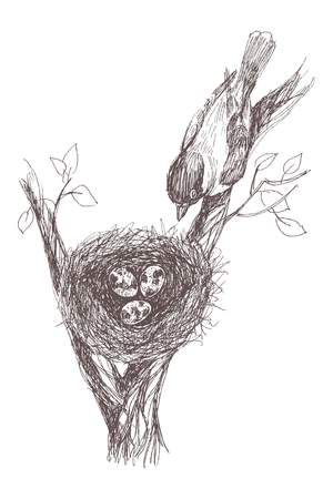 Vector illustration of hand drawn nest with spotted eggs and bird. Graphic retro style, beautiful illustration.