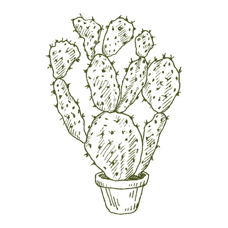 Illustration of plants in a pot isolated on a white background. Illustration