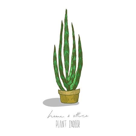 Illustration von Pflanzen in einem Topf auf einem weißen Hintergrund Standard-Bild - 99823067