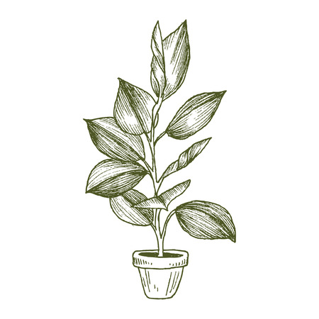 Illustration of houseplants, indoor and office plants in pot isolated on white background. Vector linear sketch house plant ficus illustration