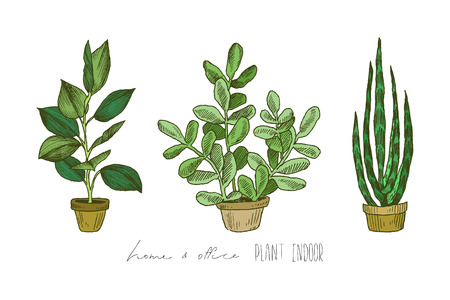 Illustration Of Houseplants, Indoor And Office Plants In Pot.Set Of House  Plant Isolated
