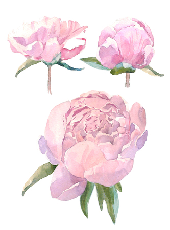 Set of watercolor illustration vintage bouquet of flowers, peonies. Hand drawn illustration isolated on white background