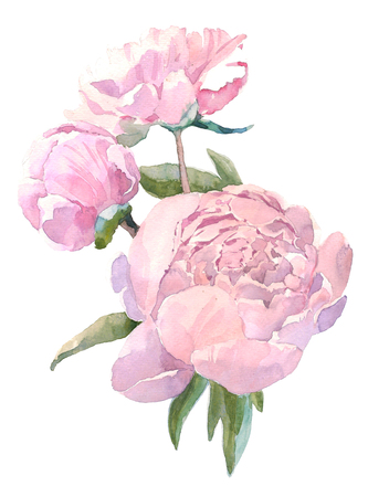 Watercolor illustration vintage bouquet of flowers, peonies. Hand drawn illustration isolated on white background