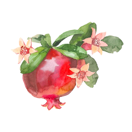 Hand drawn pomegranate, Watercolor painting on white background, Aquarelle illustration For Food Design.