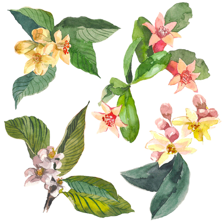 Set of different yellow, pink flowers of citrus trees for design. Watercolor blomming flowers on a branch, leaves. Set of floral elements for your compositions.