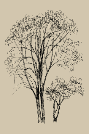 Hand drawn vector illustration of two tree. Isolated illustration engraved style. Retro style. Botanical sketch