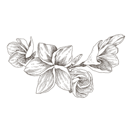 Hand drawn sketch tropical flower Plumeria. Vector illustration engraving style. Highly detailed line art isolated objects