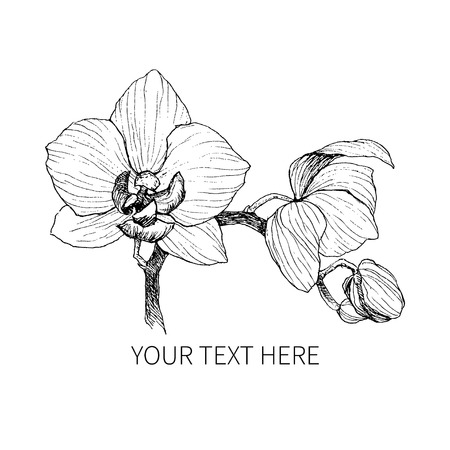 Hand drawn Vintage orchid flowers icon