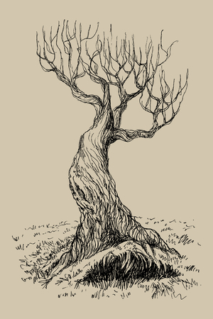 Fairy tree in vintage engraving style Illustration