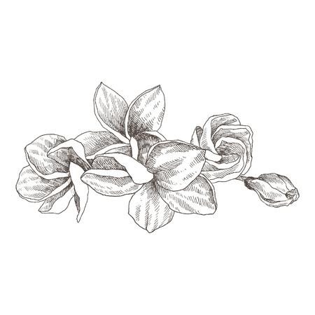 Hand drawn tropical plant icon